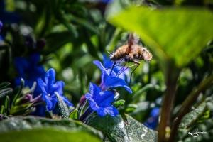 Insekten-9696